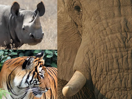 Report: Asian, African Countries Failing to Control Illegal Wildlife Trade :: ANNAMITICUS | My Passions...All things with 4 Feet | Scoop.it
