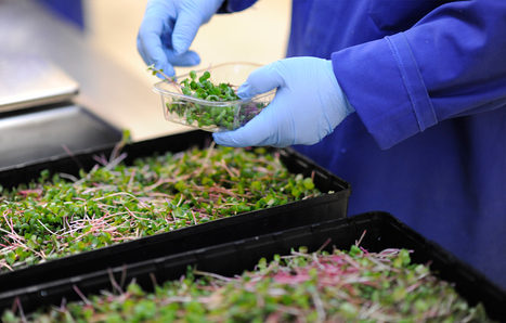 The future of agriculture | Sustainability Science | Scoop.it