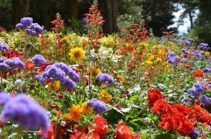 Dossier > Le jardin des gens pressés | pour mon jardin | Scoop.it