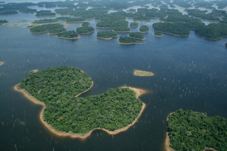 Hydropower dams worldwide cause continued species extinction | GarryRogers Biosphere News | Scoop.it
