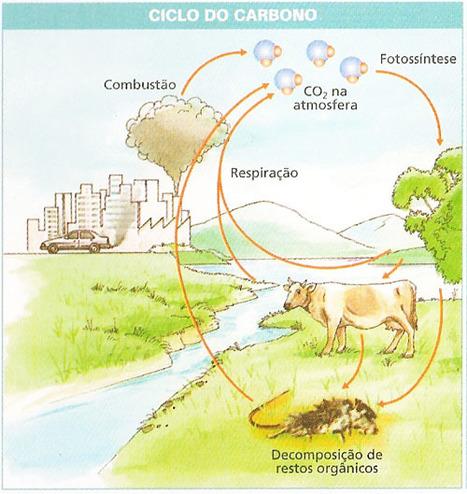 ciclo do carbono-imagem | Biologia 1º em C | Scoop.it