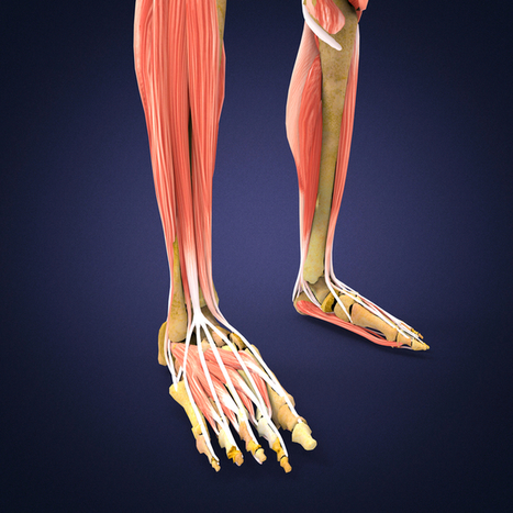 Treating Patients with Compartment Syndrome after Massage Therapist School | | Massage Therapy | Scoop.it