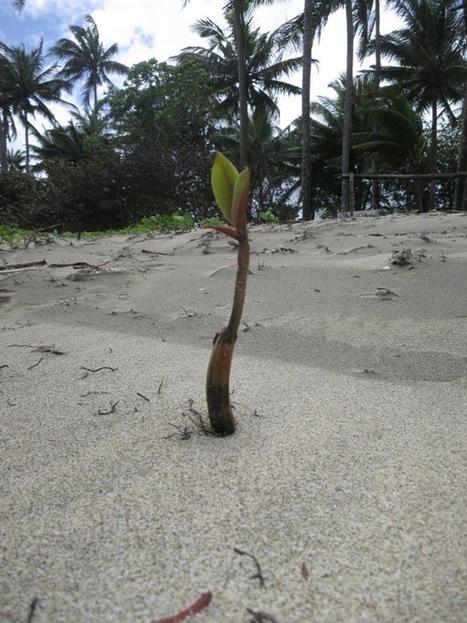 Mangrove Matters   Amocean OceanScoops   Scoop.it