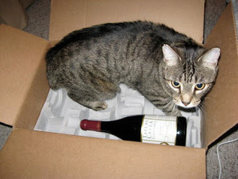 The Gray Report: What's the best wine? Ask your cat | The pick of the best wine stories from social media and across the 'net | Scoop.it