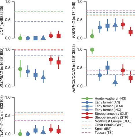 Genome-wide patterns of selection in 230 ancient Eurasians : Nature : Nature Publishing Group | Bioinformatics, Comparative Genomics and Molecular Evolution | Scoop.it