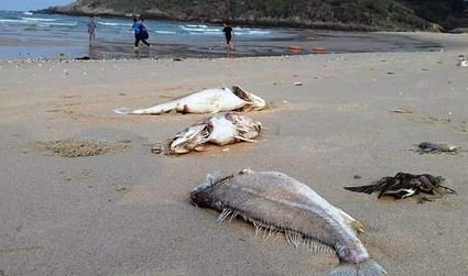 Foreign scientists help Vietnam unravel mass fish deaths | Business News & Finance | Scoop.it