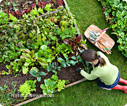 It's about time!  #Foodbanks start small gardens to grow fresh produce for #needy | News You Can Use - NO PINKSLIME | Scoop.it