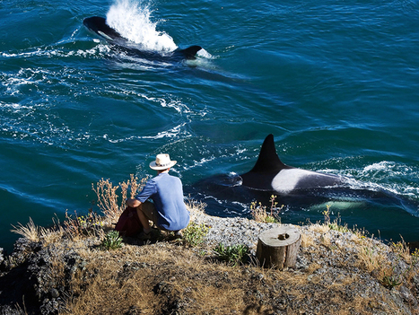 Discover the Southern Gulf Islands | Orca Whales in the Wild | Scoop.it