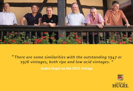 ALSACE: 2015 Harvest Report from Famille Hugel   Vitabella Wine Daily Gossip   Scoop.it