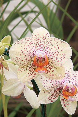 Orquídea, quanta beleza!!!   Orquídeas   Scoop.it
