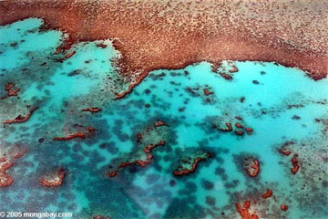 Australia's floods threaten Great Barrier Reef | Environmental Happenings | Scoop.it