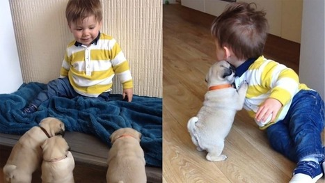 Adorable toddler attempts to outcrawl stampede of pug puppies | ♨ Family & Food ♨ | Scoop.it