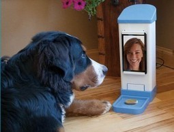 Is FaceTime With Your Pets The Next Big Thing in Mobile? | Mobile ... | Small Business Online Marketing | Scoop.it