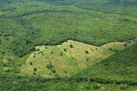 Deforestation Drives Changes in Climate, Food Production | Climate change challenges | Scoop.it