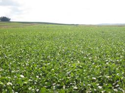 Farn » Suplemento de Derecho Ambiental: El modelo agropecuario argentino | Derecho ambiental | Scoop.it