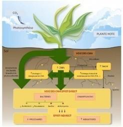 Les mycorhizes : des acteurs potentiels en agroécologie ? | Chimie verte et agroécologie | Scoop.it