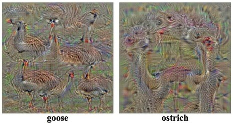 Understanding Neural Networks Through Deep Visualization - Jason Yosinski | DigitAG& journal | Scoop.it