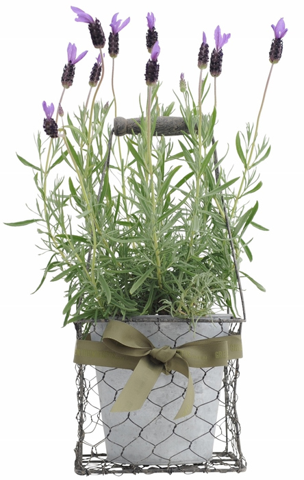 Send a Plant - Green Thumb Gifts | Plants Online | Scoop.it
