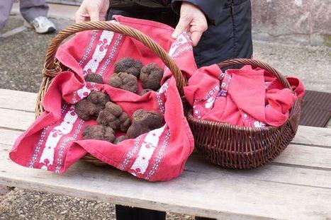 Lalbenque : Ouverture de la saison de la truffe le mardi 6 décembre | Actualités du tourisme lotois | Scoop.it