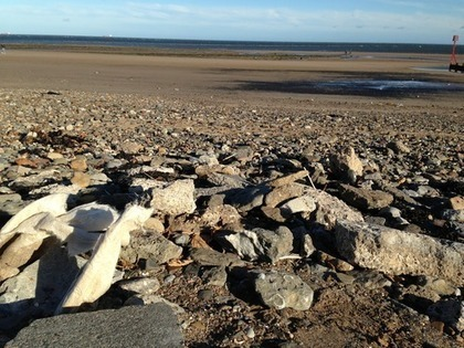 Discussions : Environment Agency respond to FREDs Complaint | Redcar Beach Action Group | Scoop.it