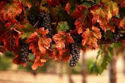 L'islam et le vin? | Oenologie - Vins - Bières | Scoop.it