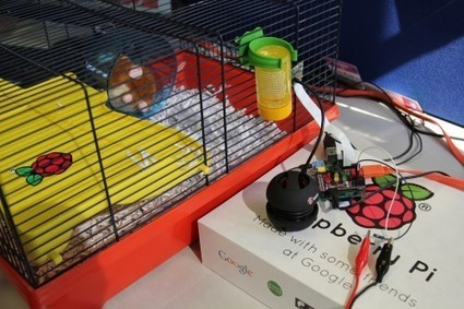 Hamster Party Cam | Raspberry Pi | Raspberry Pi | Scoop.it