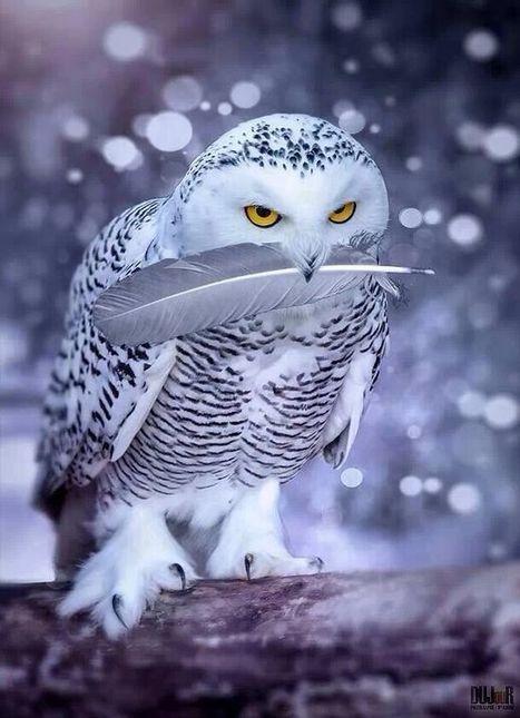 Inspiration | Devotional Emotional Spiritual Consciousness Intelligence | Scoop.it