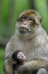 STRESS au travail: Le singe nous l'explique - General and ... - santé log   Prévention de la santé et du stress.   Scoop.it