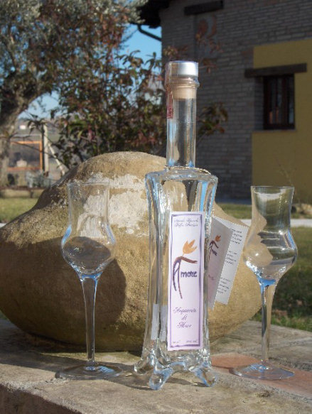 Terra Grata - Montecarotto: distillate of Love in Le Marche | Le Marche and Food | Scoop.it