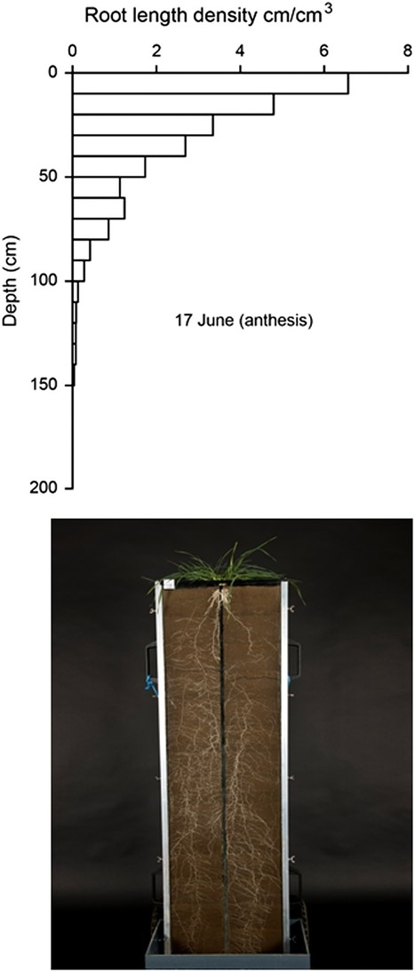 Deep roots and soil structure - Gao - 2016 - Plant, Cell & Environment - Wiley Online Library | Plant Gene Seeker -PGS | Scoop.it
