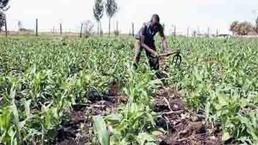 Making food safe: Two projects to combat mycotoxin contamination in Tanzania ... - Newstime Africa | Natural Pest Control | Scoop.it