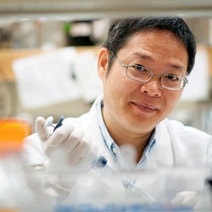 Cell signaling pathway linked to obesity, Type 2 diabetes | WIP Weekly News | Scoop.it