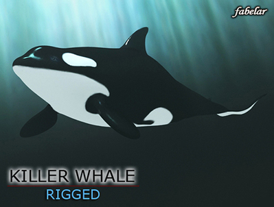 Killer whale, 3D, rigged, max, bodyPaint | 3D Library | Scoop.it