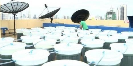 Des algues comestibles sur les toits de Bangkok | Sustain Our Earth | Scoop.it