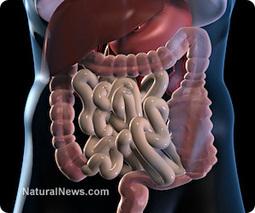5 reasons your digestive system isn't working properly | UrbanCaveNews | Scoop.it
