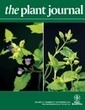 Arabidopsis RABA1 GTPases are involved in the transport between the trans-Golgi network and the plasma membrane and are required for salinity stress tolerance - Asaoka - The Plant Journal - Wiley O... | Pheromone Authority | Scoop.it