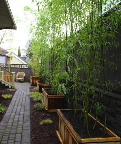 Landscaping with Bamboo | Landscaping Roswell | Scoop.it