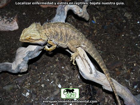 Localizar enfermedad y estrés en reptiles: bájate nuestra guía. | Enriquecimiento ambiental en animales en cautividad y mascotas. | Scoop.it