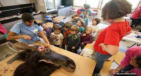 Kindergarteners in Alaska Learn How to Butcher a Moose - Wide Open Spaces | Peter Milsom's Change Delivery Consulting | Scoop.it