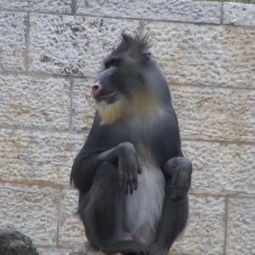 Jerusalem Biblical Zoo doesn't monkey around with diabetes - National | diabetes and more | Scoop.it