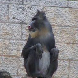Jerusalem Biblical Zoo doesn't monkey around with diabetes - National | Diabetes | Scoop.it