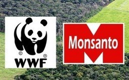 #Evil #Monsanto, World Wildlife Fund #WWF Team Up to Greenwash the #Amazon Rainforest With #GMOs | Messenger for mother Earth | Scoop.it
