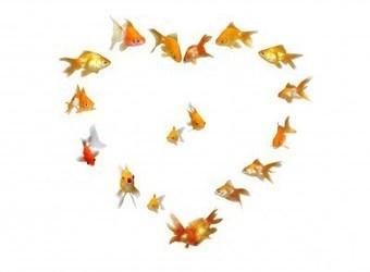 Etude RH : amour et travail une source de performance méconnue... | RH EMERAUDE | Scoop.it