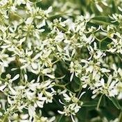 Proven Winners | Gardening Goes Way Beyond Your Yard | Annie Haven | Haven Brand | Scoop.it