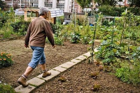 Première en Belgique: une ferme urbaine à Bruxelles | Économie circulaire locale et résiliente pour nourrir la ville | Scoop.it