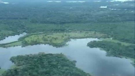 Amazonie : combien d'arbres la forêt amazonienne abrite t-elle ? | CNRS Guyane | Scoop.it