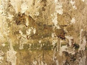 Leopard figure discovered on ancient city walls in Denizli   Hurriyet Daily News   Asie   Scoop.it