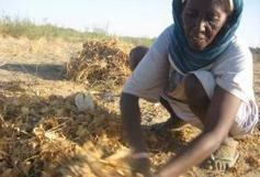 Genocide in Darfur? What Genocide?   8th Grade Genocide Web Sites   Scoop.it