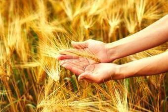 3 Seeds To Your Leadership Harvest | Coaching Leaders | Scoop.it