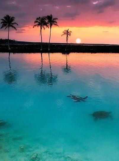Twitter / Fascinatingpics: Tropical sunset, Hawaii ... | Hawaii with Aloha | Scoop.it